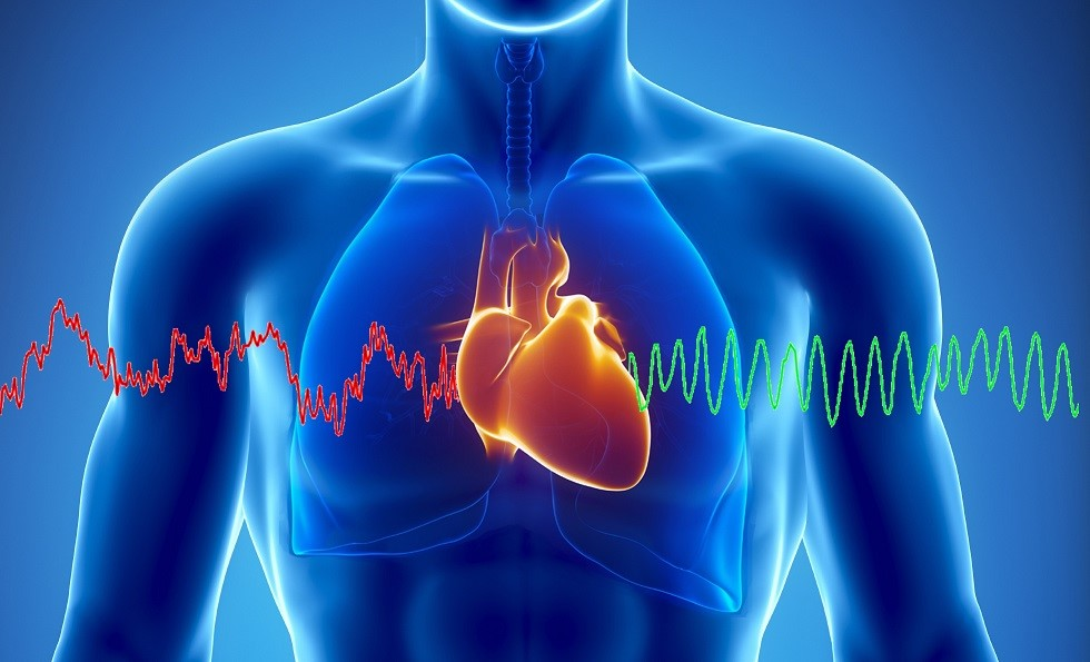 Chiropractic Improves Heart Rate Variability & Organ Health